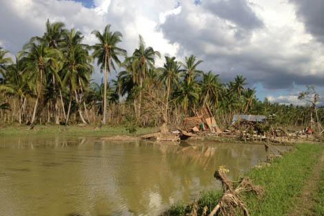 Devastation left behind by Super typhoon Bopha in Philippines, December 2012.