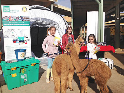 Image of children with alpacas in front of ShelterBox display at the Alstonville Public School 'Groovy Green Fair' for BSW